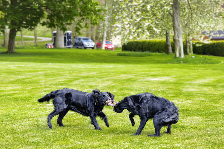Dogs in a park