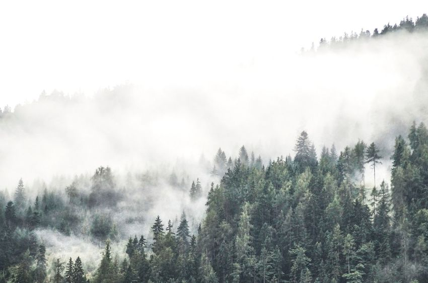 Forest in the clouds Wanderlust Tree Nature Fog Beauty In Nature Forest Growth Mist Day Scenics Tranquil Scene No People Outdoors Tranquility Sky Mountain Hazy  Landscape