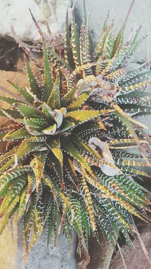 Intrigue Artist Art Life POTD Photography Createdaily Love Melbourneartists Inspire Summer Home Australia Nature Succulents Plants Sunset