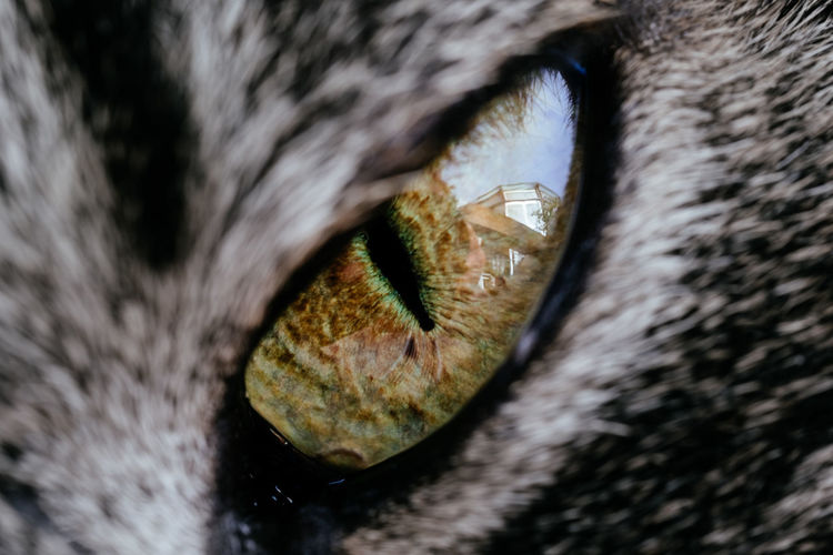 THE EYE Animal Animal Body Part Animal Eye Animal Head  Animal Mouth Animal Nose Animal Themes Cat Close-up Domestic Domestic Animals Domestic Cat Extreme Close-up Eye Feline Full Frame Mammal No People One Animal Pets Selective Focus Vertebrate Whisker