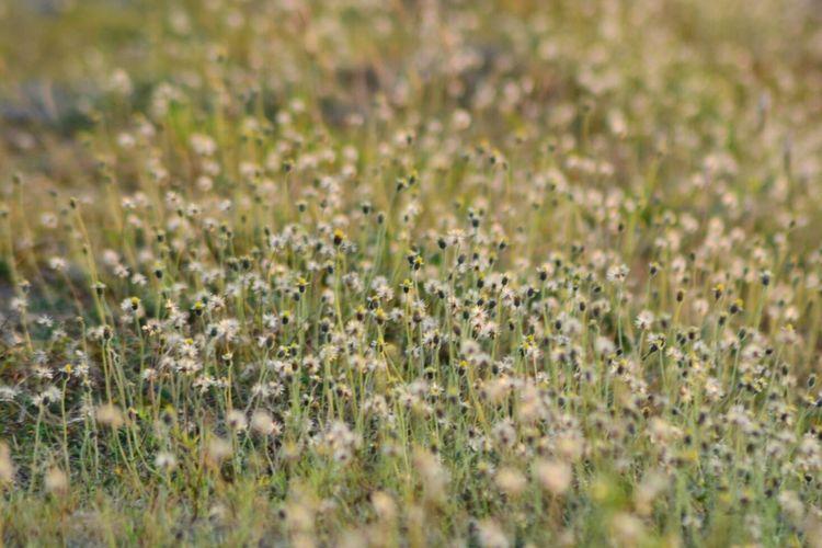 Flowers growing on field
