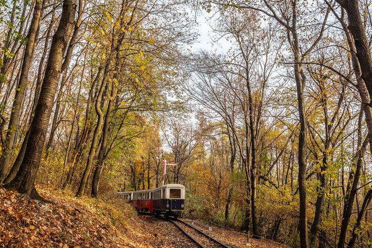 Trees Forest Rail Road Red Railway Railroad Track Train Day Public Transportation Outdoors Rail Transportation No People Track Autumn Nature Plant Land Vehicle Transportation Mode Of Transportation Tree Land Travel WoodLand