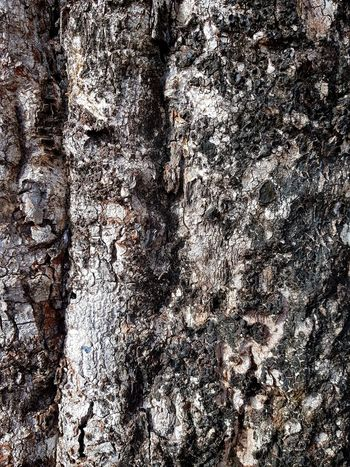 tree bark Tree Trunk Backgrounds Full Frame Textured  Pattern Close-up