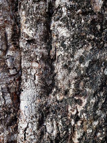 tree bark Tree Trunk Tree Bark Backgrounds Full Frame Textured  Pattern Close-up The Still Life Photographer - 2018 EyeEm Awards