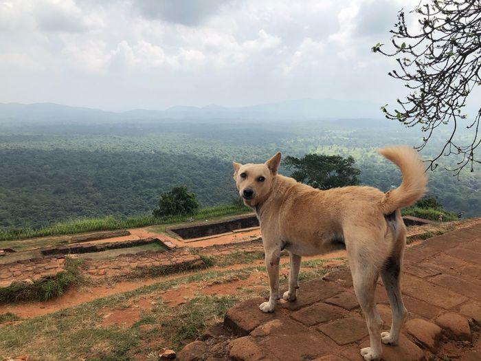 Dog at summit