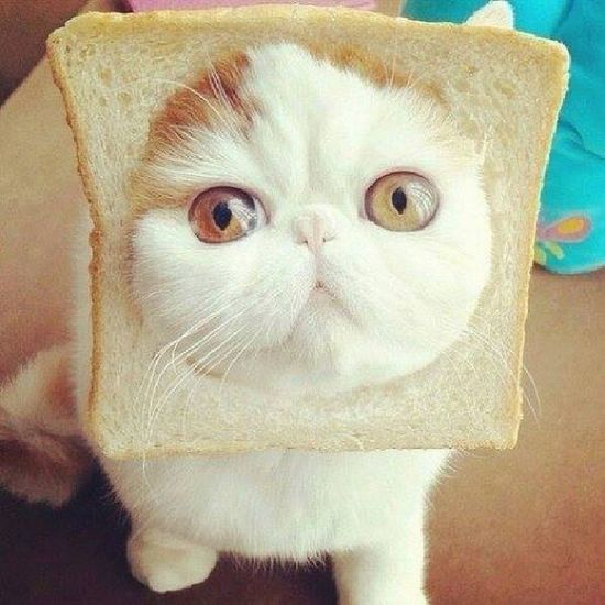 Hey. Can I bite that bread then kiss you? 'Cause you're really cuuuute! :( Notmine Randomphoto