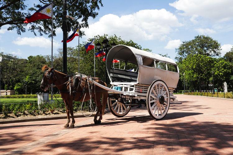 Kalesa (horse ride) Animal Cruelty Horse Cart Tree Horse Cart Sky Cloud - Sky Carriage Horsedrawn Cart Wagon Wheel Horseback Riding Pony Wheel Working Animal Horse Stable Bridle Herbivorous Rickshaw