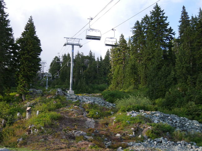 Cable Day Green Color Mountain Nature No People Off Season Outdoors Scenics Ski Lift Skiing Tranquility Tree