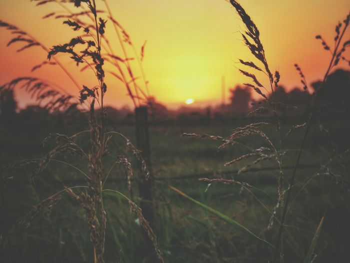 Meadow at sunset