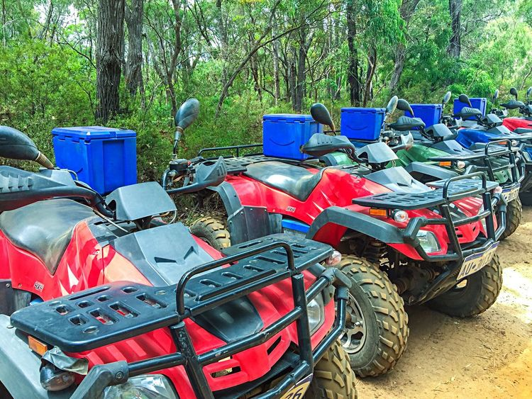 Quad Bike Tour: A Perspective Forest Photography Transportation Woodlands Four Wheeling Quad Bike Quad Bike Tour Quad Biking Eco Adventure Trees Wilderness Western Australia Boranup Forest Leeuwin Naturaliste Forest Adrenalin Ride Travel Margaret River Region Karri Trees Woods Nature Recreational Pursuit Perspective Diminishing Perspective Red Blue Adventure