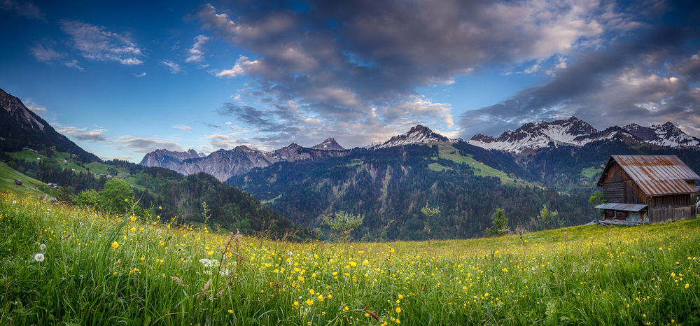 Evening mood in the mountains Snow Summit Großes Walsertal Beauty In Nature Cloud - Sky Day Field Fontanella Grass Green Color Landscape Mountain Mountain Range Nature No People Outdoors Panoramic Plant Rural Scene Scenics Sky Tranquility Travel Destinations Tree