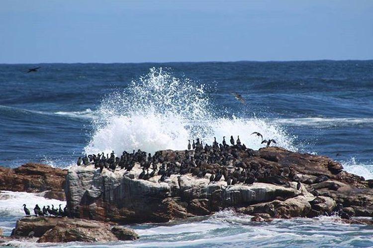 Capepoint Buffelsbaai Weekend Braai Spring Capetown MLintheCity Muchlatergram Latergram Westerncape Blue Wave
