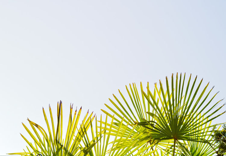Green is our future Outdoors Outdoor Photography Nature Nature_collection Nature Photography Naturelovers Nature On Your Doorstep Travel Travel Destinations Paris Beauty In Nature Plant Plant Part Plant Life Leaves Lookingup Blue Sky Sky Minimalism Minimal Minimalobsession Minimalist Green Color Green Earth Wildlife Wildlife & Nature Wild Fragility Growth Growing Simplicity Simple Beauty Beautiful Nature Palm Tree Palm Leaf Leaf Tree Copy Space Tropical Climate No People Clear Sky Day Low Angle View Frond Sunlight Close-up My Best Photo The Minimalist - 2019 EyeEm Awards
