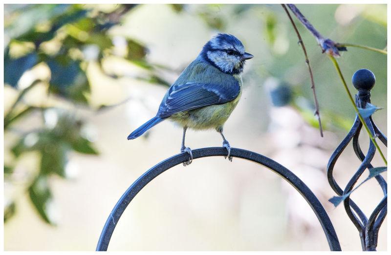 Close-up of bird perching on metal