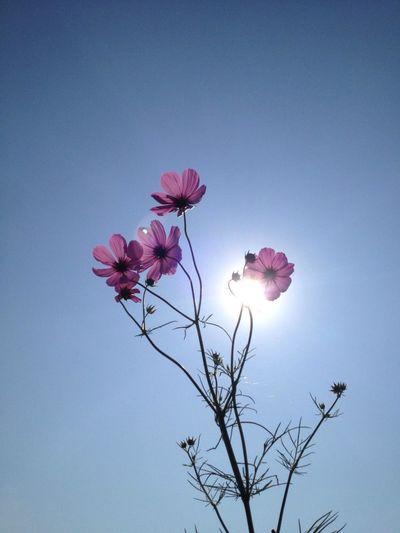 Flower Flowerporn EyeEm Nature Lover Noedit #nofilter