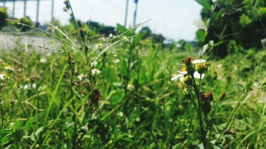 Flores Nature Growth Plant Focus On Foreground Beauty In Nature Outdoors Day Flower No People Close-up Insect Fragility Agriculture Freshness First Eyeem Photo