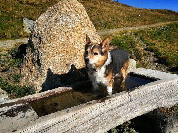 Mydog Likeit Abkühlung Brunntrog Herbst