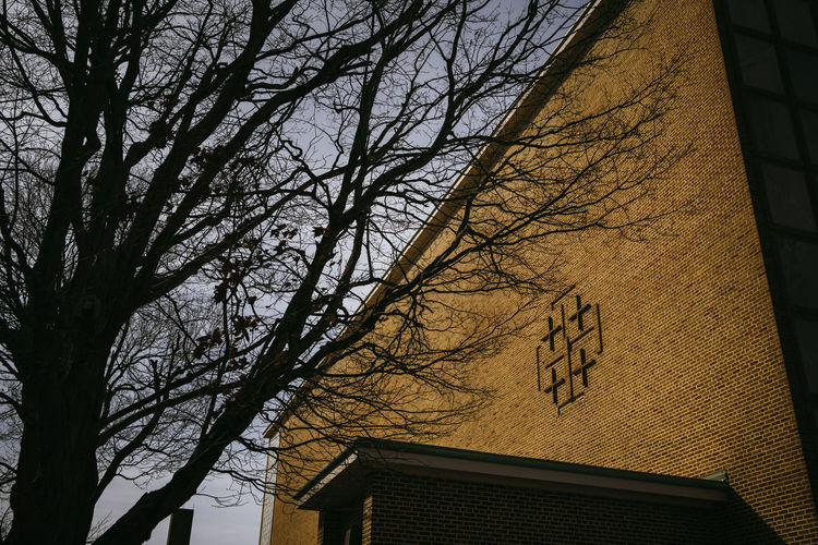 Low angle view of bare tree and building against sky