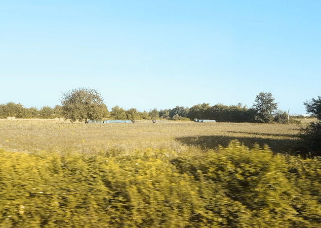 #15722 Day Environment Landscape Nature Non-urban Scene Outdoors Scenics - Nature Sky Summer, Sunlight Tranquility View From Train View From Train Window