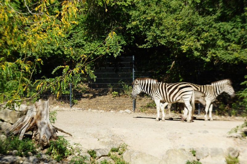 Animal Themes Animal Plant Mammal Tree Animals In The Wild Animal Wildlife