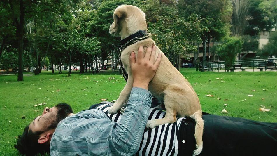 Dogsofinstagram Dog Labrador Beagle Bestfriend Amorperruno Amomiperro Dog Love DogLife❤️🐶 Dog❤ Dogoftheday Doglover Dog Life Dogstagram Dogslife Dog Walking Dogs Doglovers