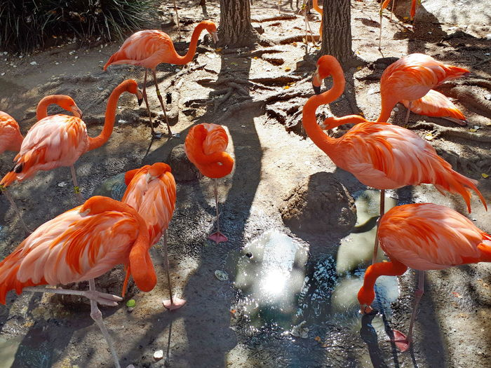 Group of coral flamingo. Coral Colored Coral Color Birds Bird Photography Group Of Birds Light And Shadow Animals EyeEm Nature Lover Nature Fauna Flamingo Flamingos Soft Coral Group Of Animals EyeEmNewHere