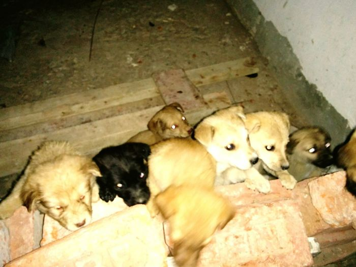 Cuteness Overload Puppies Today Straypuppyyesterday puppies mom were dead due to car accident ???