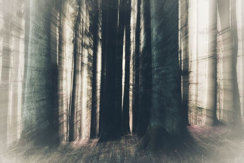 Woods Naturelovers Nature Photography Nature_perfection Nature Nature_collection Naturebeauty Tree Trees Forest Forest Photography Magical Forest Magical Creative Creative Photography CreativePhotographer Artistry Textured  No People