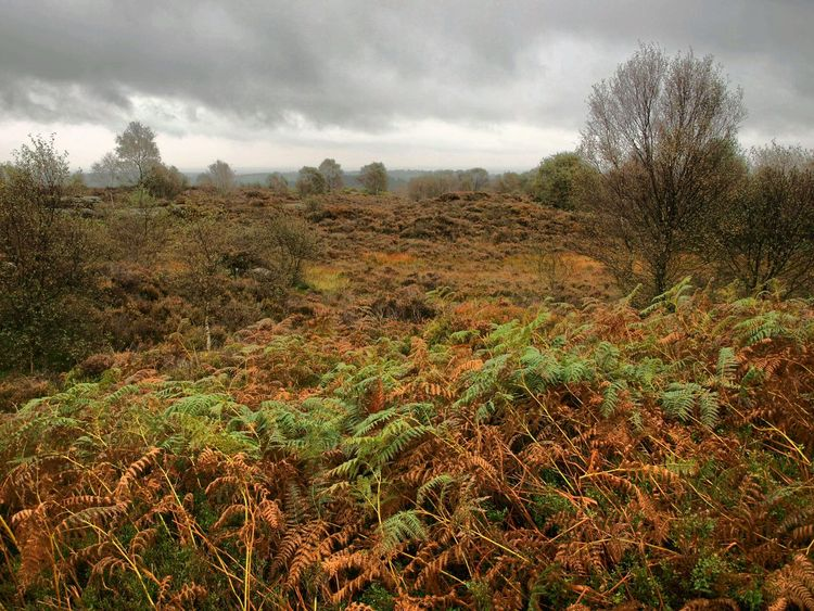 Nature Tree Sky Cloudy Bracken Autumn Colours Beauty In Nature Landscape No People Dramatic Sky Scenics Outdoors Walking Around Sky And Clouds Yorkshire