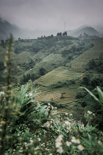Sapa in winter Plant Environment Landscape Growth Beauty In Nature Tranquil Scene Land Field Sky Nature Scenics - Nature Tree Tranquility Agriculture No People Mountain Day Rural Scene Green Color Farm Outdoors