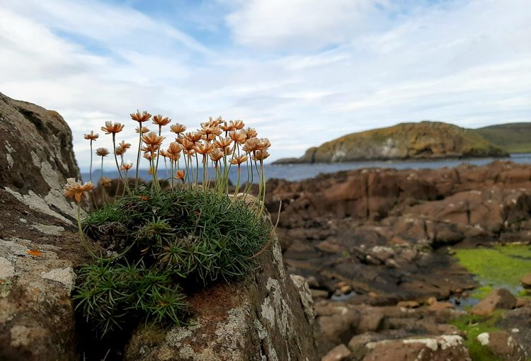 Plants growing on rocks by land against sky
