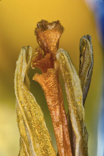 [Nikon EL-Nikkor 50mm f/2.8N * 9:1 magnification] Close-up Detail Flower Freshness Leaf Macro Maximum Closeness Multi Colored Natural Pattern Pistil Stamen SuperMacro