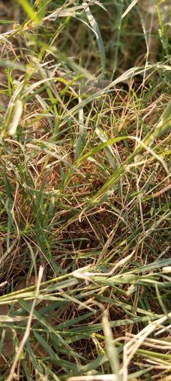 Full frame shot of crops on field