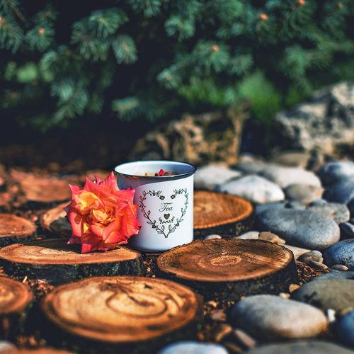 Mug by flower on log