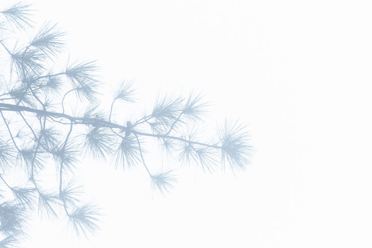 Backgrounds, leaves, mist, cold cover, white ground Abstract Abstract Backgrounds Back Lit Backgrounds Beauty In Nature Close-up Copy Space Dandelion Extreme Close-up Flower Freshness Macro Nature No People Pattern Plant Softness Textured Effect Vulnerability  White Background White Color