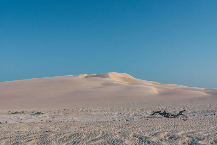 Exploring the beautiful dunes of Lencois Maranhenses. Arid Climate Beauty In Nature Blue Branch Clear Sky Day Desert Desert Dry Horizon Over Land Landscape Minimalism Nature No People Outdoors Sand Sand Dune Scenics Sky Sun Tranquil Scene Tranquility Travel Travel Destinations Traveling The Great Outdoors - 2017 EyeEm Awards EyeEmNewHere Sommergefühle Lost In The Landscape The Great Outdoors - 2018 EyeEm Awards Capture Tomorrow A New Perspective On Life