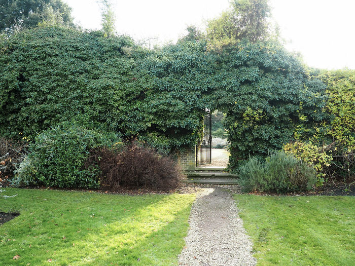 Peace Garden Charlton House Entrance Gate Green London Peace Garden Plants Day England Formal Garden Garden Garden Path Grass Green Color Growth Hedge Mindfulness Nature No People Outdoors Park Tranquil Scene Tranquility Tree