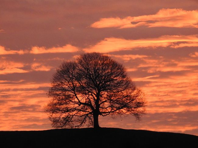 Beauty In Nature Bare Tree Lone Silhouette Tree Sky Sunset