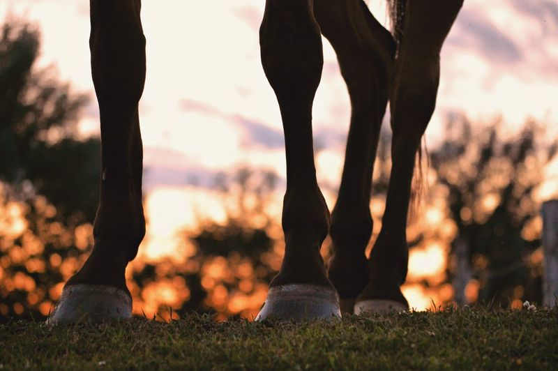 Grass Outdoors Sunset Close-up Sky Light And Reflection Nature Animal Horse Nikon Nikon D3200 Nikonphotography Equine Equine Photography Animal Body Part Golden Hour Bokeh Leg Shot Hooves