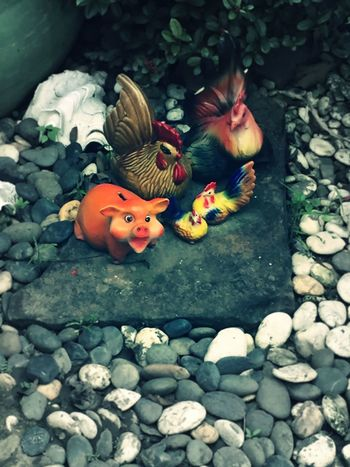 Some garden decoration. Garden Decoration Gardening Animal Themes Close-up Day Decoration Funny Figures Garden Garden Arrangement Garden Decor Garden Photography Gardens Gerdening Happy Pig Nature No People Outdoors Pebble Pig Rooster