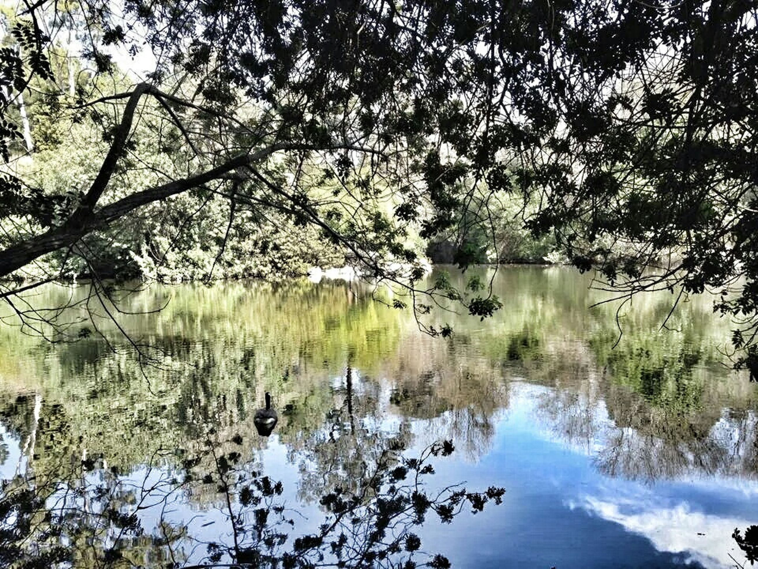 tree, tranquility, water, reflection, tranquil scene, beauty in nature, nature, lake, scenics, branch, growth, day, plant, river, idyllic, outdoors, no people, non-urban scene, sky, forest