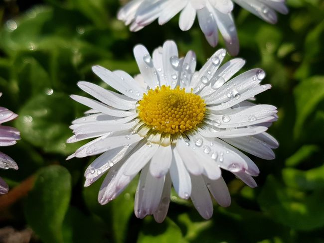 Flowering Plant Plant Beauty In Nature Nature Close-up Freshness Growth Botany Summer Flower Head Multi Colored Fragility Pollen Outdoors Inflorescence Vulnerability  No People Outdoor Pursuit Daisy