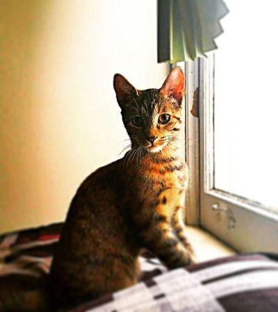 Toronto Ontario Canada Funtimes Mobilephotography Note4 Cat Kitten Baby Babycat Morningtime