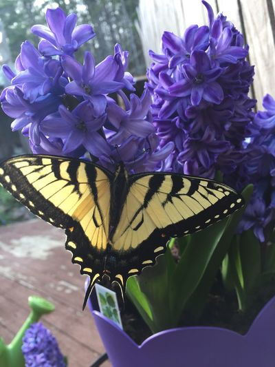 Flower Nature Beauty In Nature Purple Freshness Blooming One Animal Fragility Outdoors No People Animal Themes Plant Close-up Animals In The Wild Insect Flower Head Butterfly - Insect