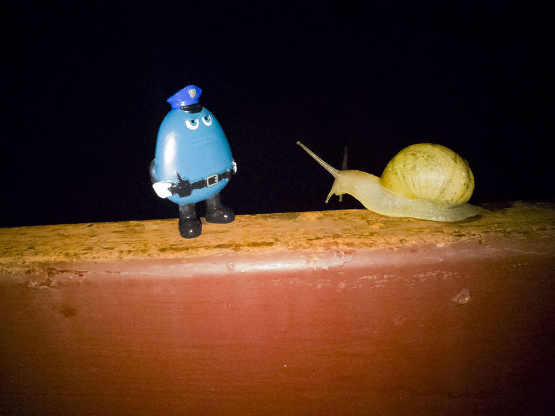 Snail got ticket for speeding; she declares she'll only pay with gnawed on tomatoes leaves. #animals #cute #funny #funnynature #humorism #Nature  Snails Snails Having Fun