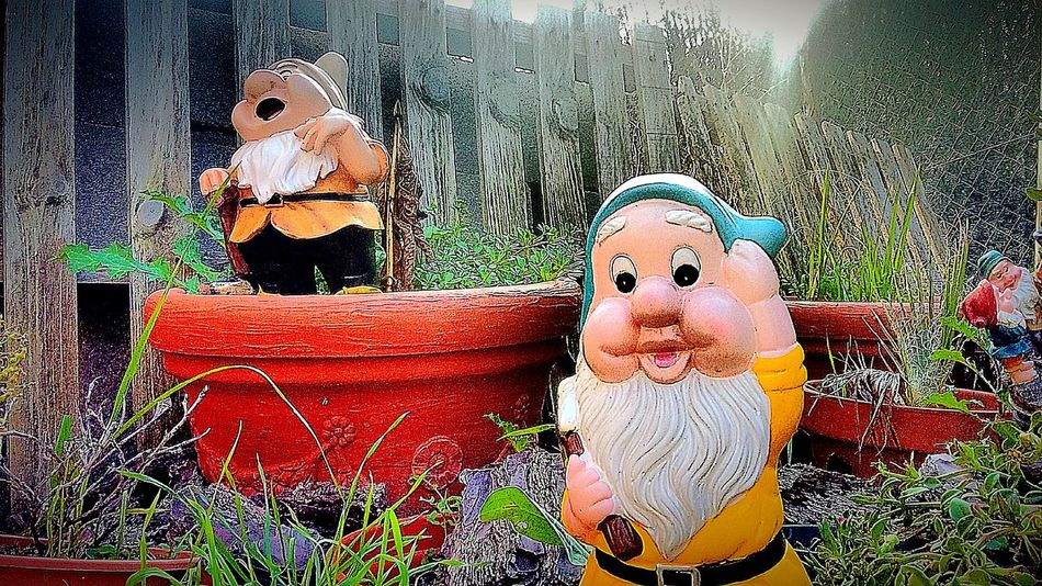 Showcase: December in my garden Happy Garden Hello World Gnomes Gnomo