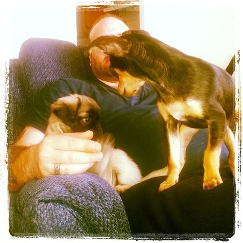 Chloe-Chelsea our toy Chihuahua & Zoey-Zena our Miniature Pug. We♥ them. Great companions. But lots of work☆