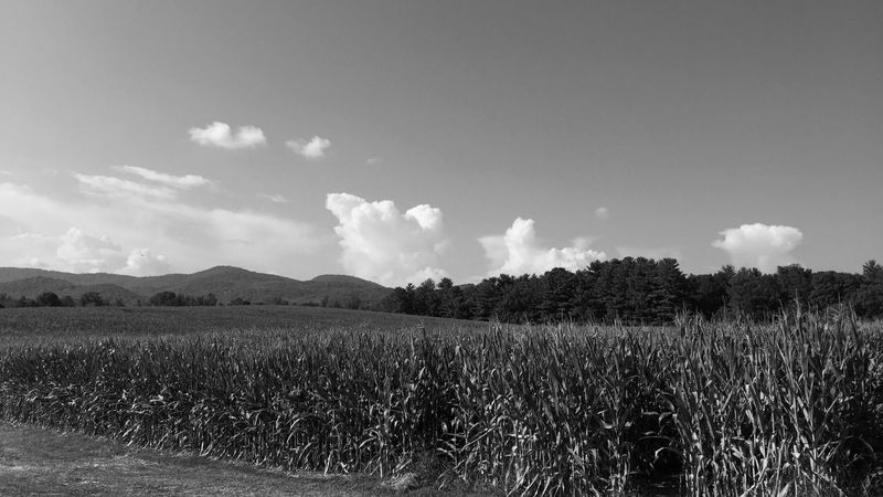 Farm View IPhone Eye Em Best Shots Blackandwhite Bnw EyeEm Nature Lover Hendersonville,NC Summer Views