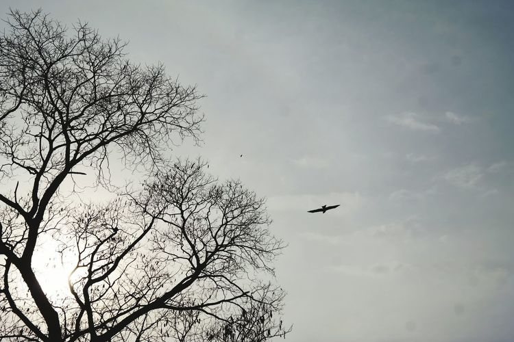 Is it a bird , is it a plane?Flying Bird Sky Animal Themes Cloud - Sky Day Low Angle View Premium Collection Success Aim Animals In The Wild Tree Naturein Premnagar, Dehradun, India Flying High Long Goodbye The Great Outdoors - 2017 EyeEm Awards Lost In The Landscape Go Higher