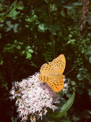 Butterfly - Insect Insect Leaf Close-up Animal Themes Plant